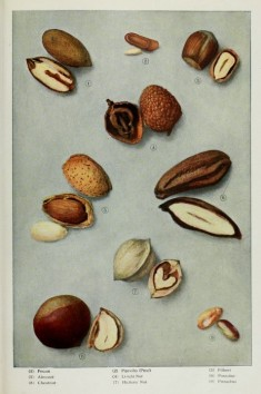 Nuts-various-edible2