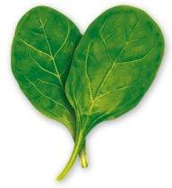 spinach-dd-02